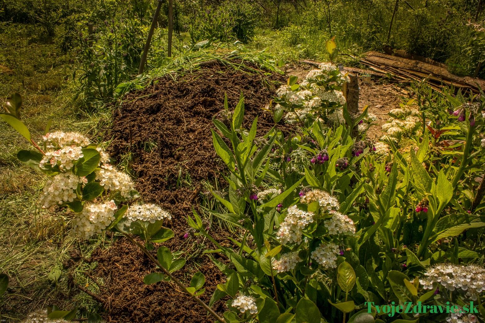 439ebe086 Permakultúrna záhrada: V čom spočíva jej čaro a ako si ju založiť ...